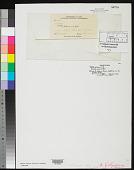 view Nitella polycera R.M. Whelden, ined. digital asset number 1
