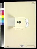 view Rivularia australis Harv. digital asset number 1