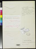 view Paspalum angustifolium Nees, nom. illeg. digital asset number 1