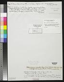 view Chlorotylium compactum Kütz. digital asset number 1