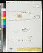 view Lyngbya flocculosa Zanardini digital asset number 1