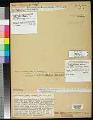 view Hyella linearis Setch. & N.L. Gardner in N.L. Gardner digital asset number 1