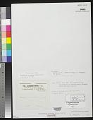 view Acrochaetium dictyotae F.S. Collins digital asset number 1