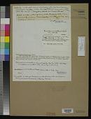 view Oscillatoria minnesotensis Tilden digital asset number 1