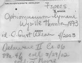 view Ophiomusium lymani Thomson, 1873 digital asset number 1