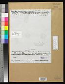 view Dasyactis saccorhizae P. Crouan & H. Crouan digital asset number 1