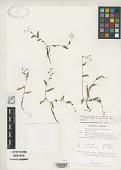 view Murdannia spirata var. parviflora Faden digital asset number 1