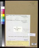 view Petronema fruticulosum Thwaites in Sm. & J. Sowerby digital asset number 1