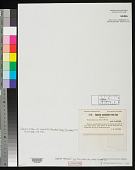 view Gigartina canaliculata f. laxa F.S. Collins in F.S. Collins et al. digital asset number 1