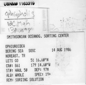 view Ophiopholis sp. digital asset number 1