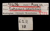 view Tamias amoenus caurinus digital asset number 1