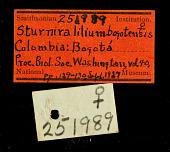 view Sturnira bogotensis digital asset number 1