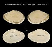 view Macoma sitkana Dall, 1900 digital asset number 1