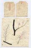 view Pennaria tiarella (Ayres, 1852) digital asset number 1