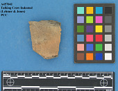view Rim Sherd: Misc. Unclassified, Talking Crow Indented Type digital asset number 1