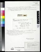 view Scytosiphon bullosus D.A. Saunders digital asset number 1