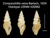 view Compsodrillia nana Bartsch, 1934 digital asset number 1