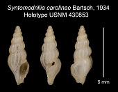 view Syntomodrillia carolinae Bartsch, 1934 digital asset number 1