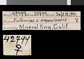 view Tamias speciosus sequoiensis digital asset number 1