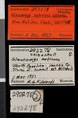 view Glaucomys sabrinus coloratus Handley, 1953 digital asset number 1