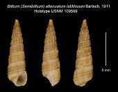 view Bittium (Semibittium) attenuatum latifilosum Bartsch, 1911 digital asset number 1