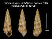 view Bittium esuriens multifilosum Bartsch, 1907 digital asset number 1
