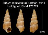 view Bittium mexicanum Bartsch, 1911 digital asset number 1