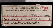 view Sciurus colliaei nuchalis Nelson, 1899 digital asset number 1