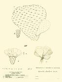view Opuntia basilaris Engelm. & J.M. Bigelow digital asset number 1