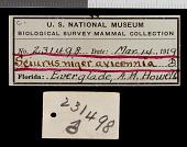 view Sciurus niger avicennia Howell, 1919 digital asset number 1
