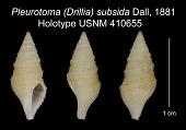 view Pleurotoma (Drillia) subsida Dall, 1881 digital asset number 1