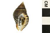 view Waved Goblet, Waved Goblet digital asset number 1