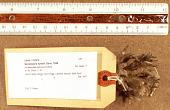 view Seriatopora hystrix Dana, 1846 digital asset number 1