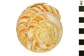 view The Emperor's Slit Shell digital asset number 1