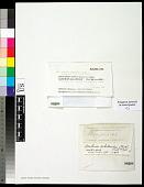 view Asahinea scholanderi (Llano) W.L. Culb. & C.F. Culb. digital asset number 1