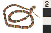 view Milk Snake digital asset number 1