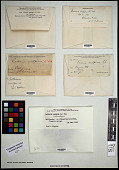 view Letharia columbiana (Nutt.) J.W. Thomson digital asset number 1