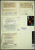 view Pertusaria coriacea (Th. Fr.) Th. Fr. digital asset number 1