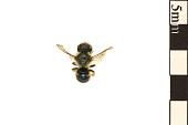 view Mason Bee digital asset number 1