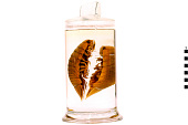 view Giant Isopod digital asset number 1