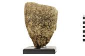 view Vase Sponge digital asset number 1