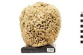 view Wool Sponge digital asset number 1