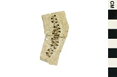 view Fossil Catkin, Fossil Ament digital asset number 1