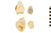 view Fossil Birch digital asset number 1
