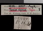 view Tamias alpinus Merriam, 1893 digital asset number 1