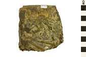view Trace Fossils: Invertebrate Burrows digital asset number 1