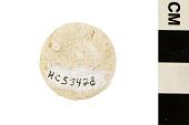 view Foraminifera digital asset number 1