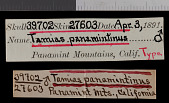 view Tamias panamintinus panamintinus digital asset number 1