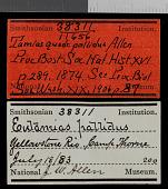 view Tamias minimus pallidus digital asset number 1