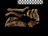 view Fragments Of Animal Mummies digital asset number 1